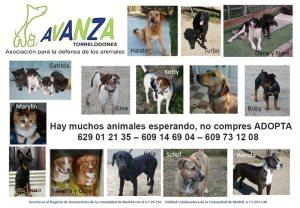 Animales en adopción en Avanza Torrelodones (mayo 2012)