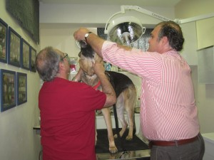 José Ramón sujeta a Chili, mientras el Dr. Hernández le coloca las gafas