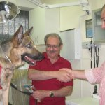 Chili, un pastor alemán que padece pannus y llevará gafas indicadas en Ocuvet Torrelodones