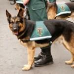 Servicio Cinológico de la Guardia Civil - Foto: www.guardiacivil.es
