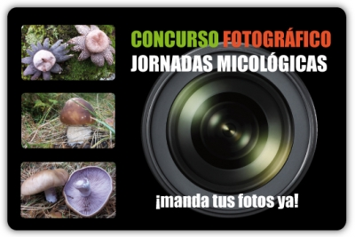 Concurso Fotográfico de las Jornadas Micológicas de Hoyo de Manzanares
