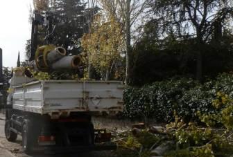 Talan los chopos en la acera de la casa-museo del escritor Ricardo León