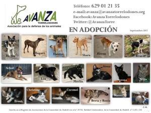 adopcion-perros-torrelodone