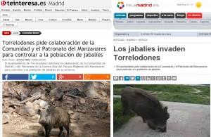 jabalies-torrelodones