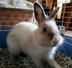 tim-conejo-en-adopcion