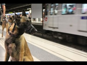 Perro en el Metro