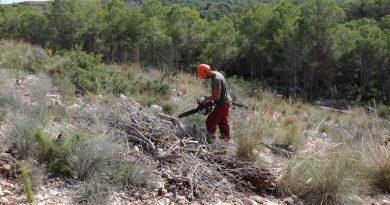 10.475 nuevos árboles para la Serra Perenxisa en dos áreas: la afectada por el incendio y la afectada por tomicus