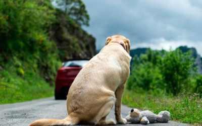 El maltrato animal como delito