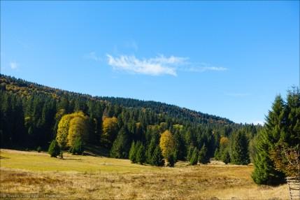 Herbst im Hochschwarzwald
