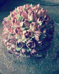 Magnólia vajkrém virággal díszített torta