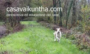Le Sunday dog di Casa Vaikuntha a Fabbrica Curone