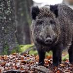 Fauna Selvatica – Agricoltori e sindaci ricevuti dalla Regione Piemonte