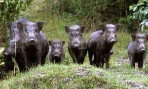 Fauna Selvatica: una proposta di Legge in sette punti
