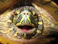 los cinco sentidos de las tortugas
