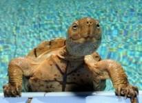 temperatura del agua en las tortugas de agua