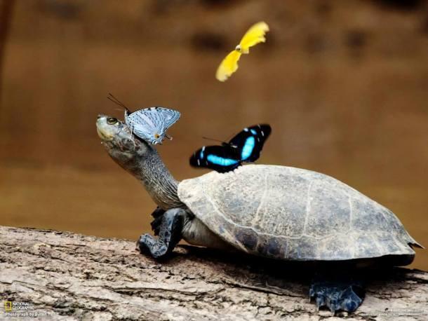 tortugas de agua
