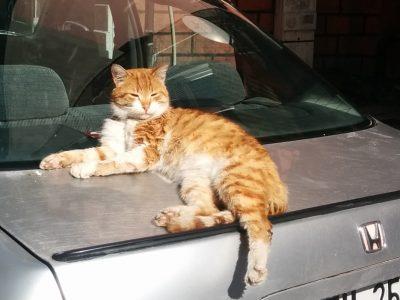 イスタンブールのHONDAの上で ひなたぼっこする猫ちゃん