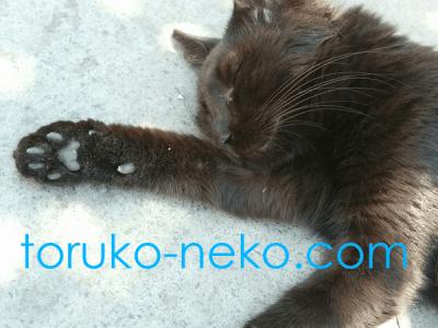 ネコの足の肉球 黒猫が安心して寝ている イスタンブール 猫歩き 写真 画像