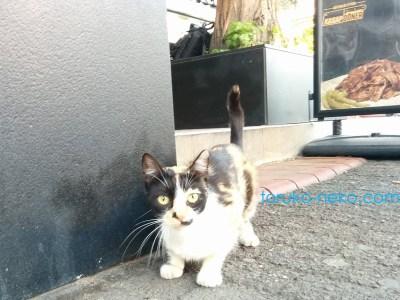 asian トルコ イスタンブール側の可愛い三毛猫一匹が黒い背景を前にこちらがわを向いている 画像 写真