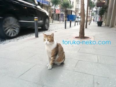 一匹の猫の後ろを、素早く動くレンジローバースポーツが写っていて躍動的な写真 画像 トルコ イスタンブール