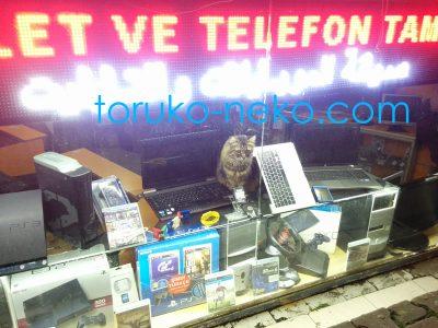 トルコ イスタンブールの中古パソコン屋さんで、パソコンの上に座ってマウスを狙っている茶色い色の猫 kitty ねこちゃん