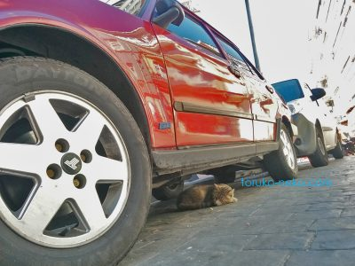 車の下で眠る一匹の猫ちゃん イスタンブールではねこはどこでも寝る。タイヤが左に大きくみえる赤い車の下で猫が安心して寝ている画像 写真