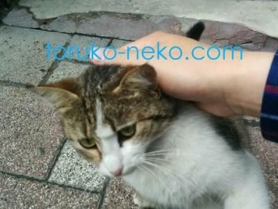 一匹の可愛い子猫がなでて欲しくてこっちに寄ってきている画像 写真