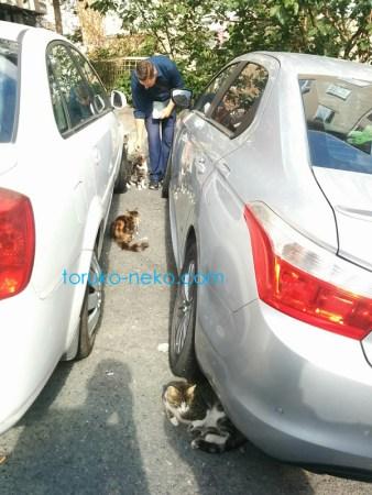 トルコ イスタンブールで、二台の車の間に、四匹の猫が、餌をおねだりしている写真 画像