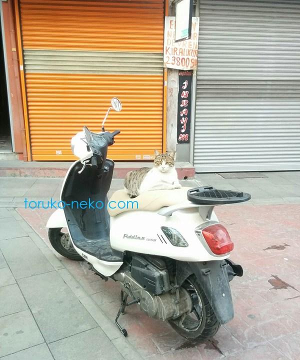 トルコ イスタンブールで、一匹の猫が逆向きにバイクにライダーとして乗っている画像 写真