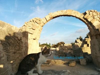 パフォス Pafos Paphos 城のアーチを背景に一匹の猫がこちらを向いている写真 画像。