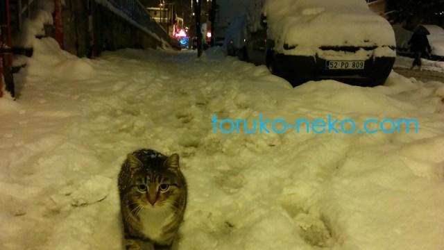 トルコ イスタンブールで朝の5時に夜行性の可愛い猫がこっちに歩いてくる様子を撮った写真 画像
