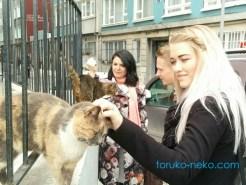 デンマーク人とイスタンブールの日常の猫の画像 写真 トルコ
