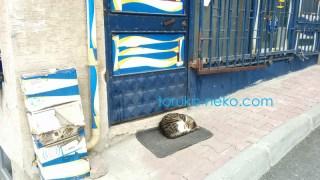 トルコイスタンブールで一匹の猫が扉の真ん前のマットの上でお昼寝をしている可愛い写真