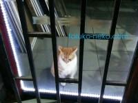 トルコ イスタンブールでお部屋の中に入れられてつまらなそうにしている一匹の猫の画像 写真 クリーム色の猫