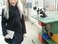 kedievi トルコ イスタンブール 猫専用の家が路上にある写真 画像