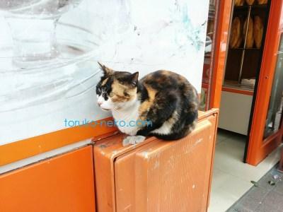 三毛猫を少し離れて撮ってみた写真 画像 いい写真の撮り方 イスタンブール