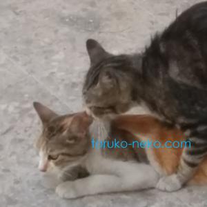トルコの猫 仕事に引継ぎ ビジネス カイゼン
