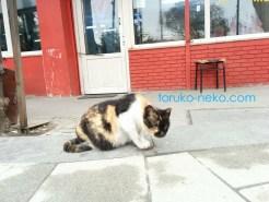 トルコ イスタンブールで一匹の猫が手をついてお辞儀しているような写真 画像