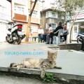 イスタンブールで 妊娠しているメス猫が横たわってこちらを向いている写真 画像