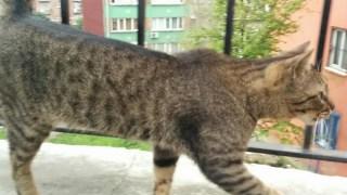 トルコ イスタンブールで一匹の猫が右を向いてシッポを上げている写真 画像