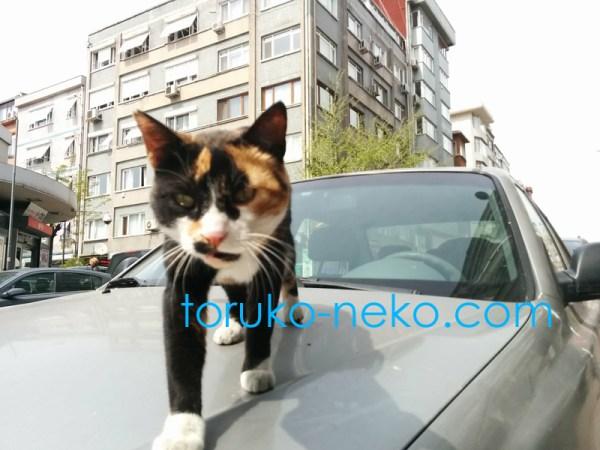 猫目線で写真を撮る インパクトのある写真の撮り方