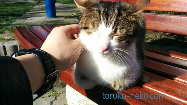 トルコ イスタンブールで春の温かい日に一匹の猫がベンチで昼寝をしている所を撫で撫でしてあげている写真 画像