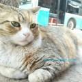 トルコ猫歩き イスタンブールの可愛い野良猫 グレイ 茶色 白の混じったふわふわの毛の可愛い猫ちゃんの写真 画像