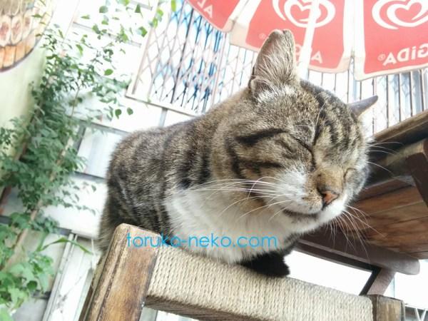お昼寝中の猫と一緒にお昼寝している感じのアングルで下から猫を撮った時の写真 画像 トルコ猫歩き