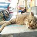 ネコのお昼寝 トルコ猫歩き イスタンブール 一匹のねこが気持ちよさそうに寝ている写真 画像。