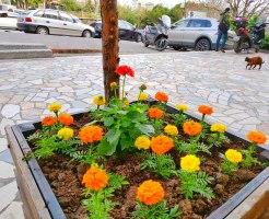 マリーゴールド オレンジ色の花 リオン 猫歩き トルコ イスタンブール ボスポラス海峡