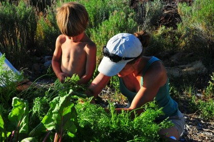 Picking carrots.