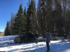 Yanking down a mis-felled tree with the truck