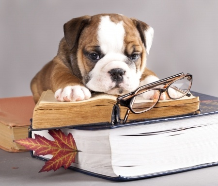 Image result for animals writing