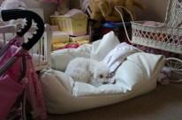 Daisy asleep in Jordan's room